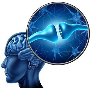 мозг для семинара Очищение прошлого