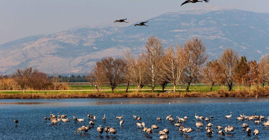озеро хула израиль